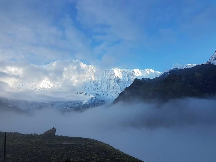 #Annapurna_Base_Camp_Trekking : The diverse terrain and variety of cultures of the region north of Pokhara make each day's walk a different experience and make the area the most popular destination in the country. do plan now.. .. #ABC_Trek #himalaya #himalayas #himalayans #himalayan #nepal #nepal🇳🇵 #nepalese #ClearSkyTreks #nepali #nepalí #nepali_instagrammers #mountains #bigmountain #bigmountains #traveling #amazing #adventures #outdoors #trekking #trip 📷: @Clear_sky_Treks.