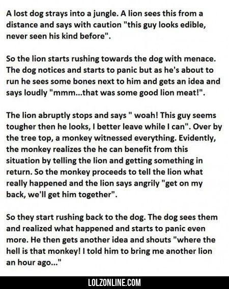 A Lost Dog Strays Into A Jungle #lol #haha #funny