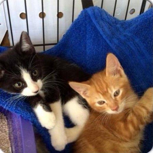 Best 25 cat hammock ideas on pinterest diy cat hammock for Kitty corner bed ideas