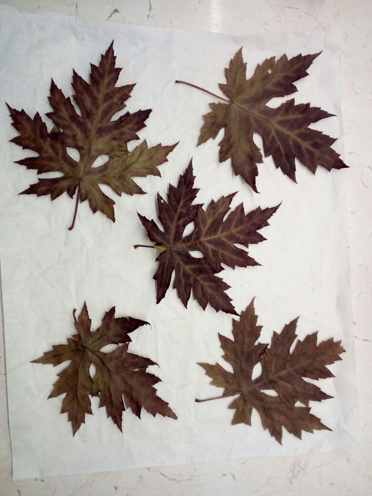 Oven dried leaves