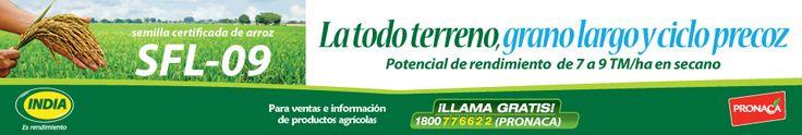 Noticias Agropecuarias y Agricolas del Ecuador y el Mundo - Periodico El Productor - Elproductor.com