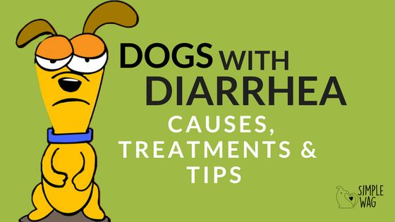 Dogs with Diarrhea: THE SCOOP ON YOUR DOG'S POOP.     Why it happens and how to remedy this messy situation!