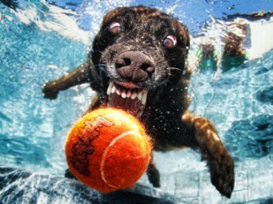 You think you know what a dog looks like when it dives into a swimming pool to fetch a ball. And then you see these astonishing underwater images by photographer Seth Casteel: It's a startling frenzy of teeth, jowls, eyes and claws.