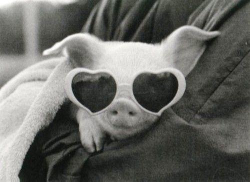 : Piglets, Baby Pigs, Adorable, Piggies, Things, Piggy, Teacups Pigs, Pet Pigs, Animal
