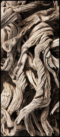 Bisti Badlands Wood (New Mexico) by kimjew