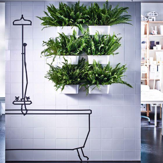 Grâce à des ventouses, vous pouvez fixer six bacs en plastique garnis de fougères sur le mur de la salle de bains.