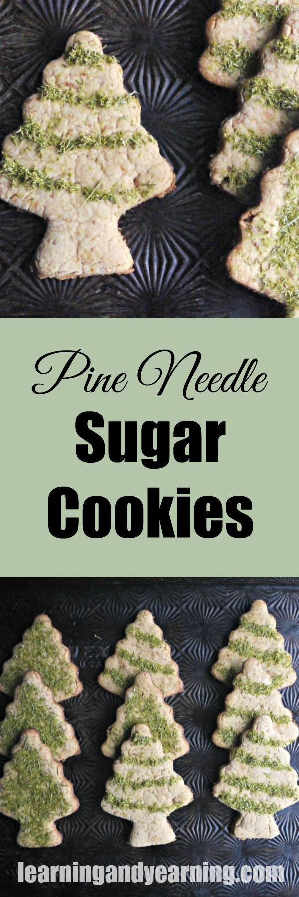 Who needs artificially colored sugar sprinkles when you can decorate your cookies with something you've foraged? Ground pine needles are edible and yummy and perfect for decorating these pine needle cookies!