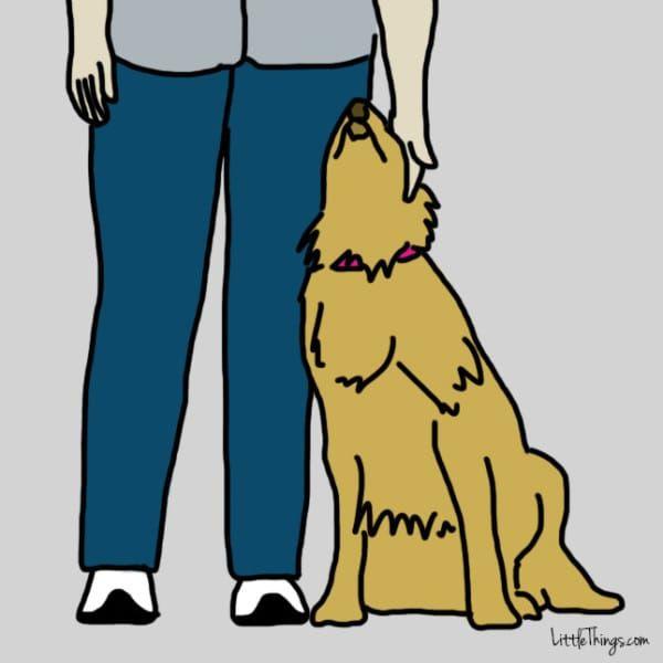 Nous aiment-ils? Il y a plusieurs techniques imparables pour le savoir. Grâce aux points suivants, vous allez pouvoir savoir votre chien vous aime.