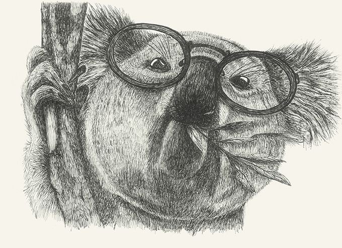 https://flic.kr/p/DeMutQ | Mr Coala #coala#animals#drawing#glasses by Leo Bellei