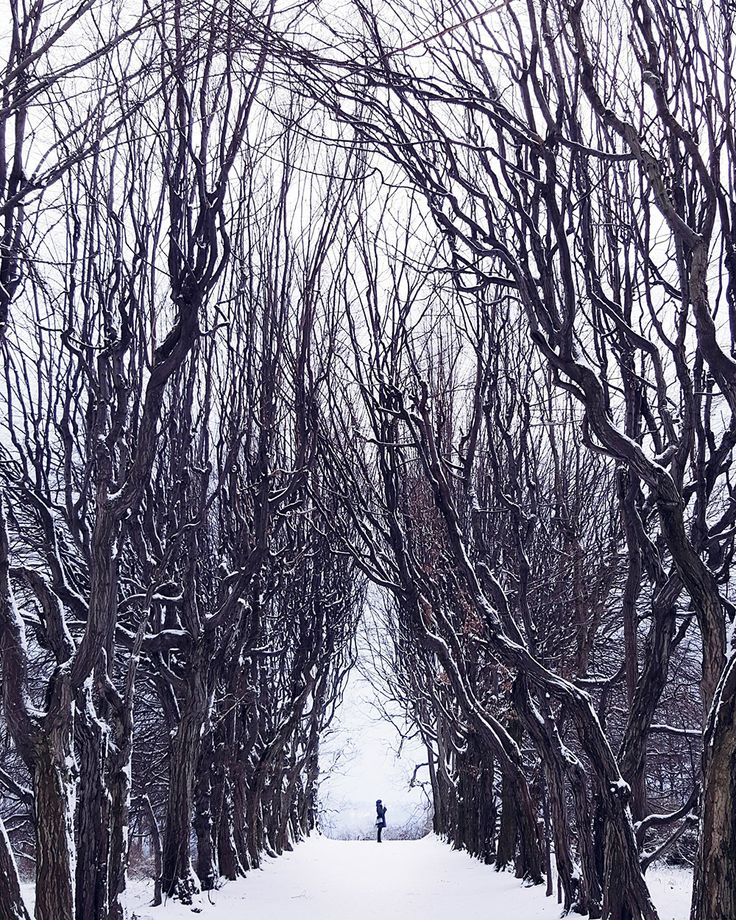 Alice in Winterland; fot. Maria Duliban; kategoria: WATER/SNOW/ICE