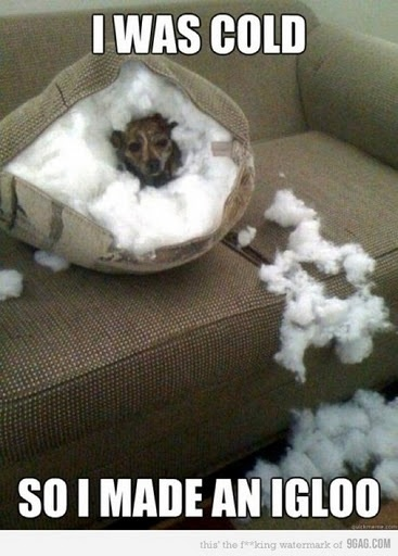 So THAT's why he destroys the pillows...