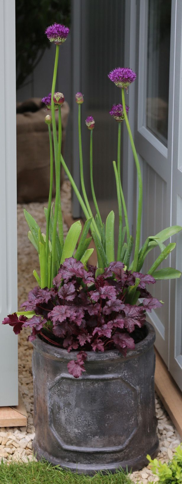 Plant spring bulbs with heuchera at the base