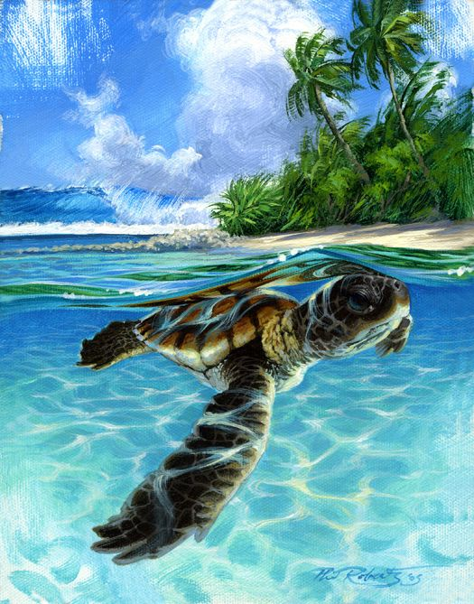 17 best images about sea turtles on pinterest underwater for Turtle fish paint