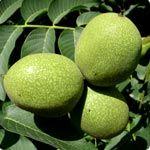 fICHA tECNICA - tODAS as Árvores de fruto