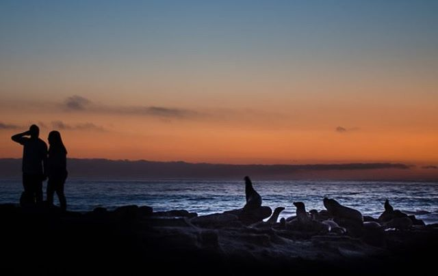 """""""Seals and people enjoying the ocean view"""" #sunset #sandiego  #SD #LaJolla #beach #ocean  Full Resolution: https://500px.com/photo/231263549/seals-and-people-enjoying-the-ocean-view-by-paya-e-?utm_medium=twitter&utm_campaign=nativeshare&utm_content=web&utm_source=500px  https://www.payaphotos.net/blog/2017/10/10/seals-and-people-enjoying-the-ocean-view #lajollalocals #sandiegoconnection #sdlocals - posted by PayaPhotos  https://www.instagram.com/payaphotos. See more post on La Jolla at…"""