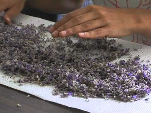 Make yourself Lavender infusion oil!