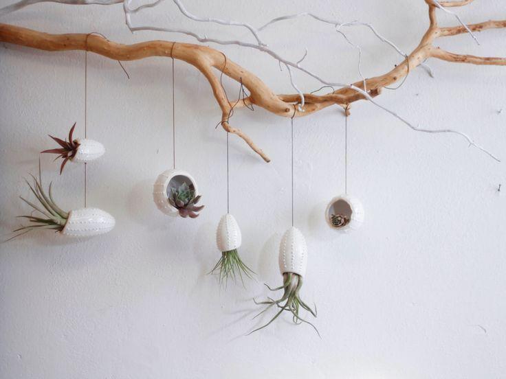 Satz von 6 Keramik hängende Pflanzgefäße in Form von Tintenfisch und Sea Urchin / Luft-Anlage / Tillandsia / Sukkulenten Pflanzer / weiße Wand hängen Pflanzer / von OlisCupboard auf Etsy https://www.etsy.com/de/listing/164013419/satz-von-6-keramik-hangende