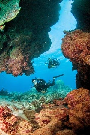 Sightseeing Tours Australia: Discover the Great Barrier Reef with an Introducto...
