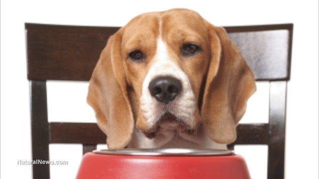 Precise Dog Food Petco