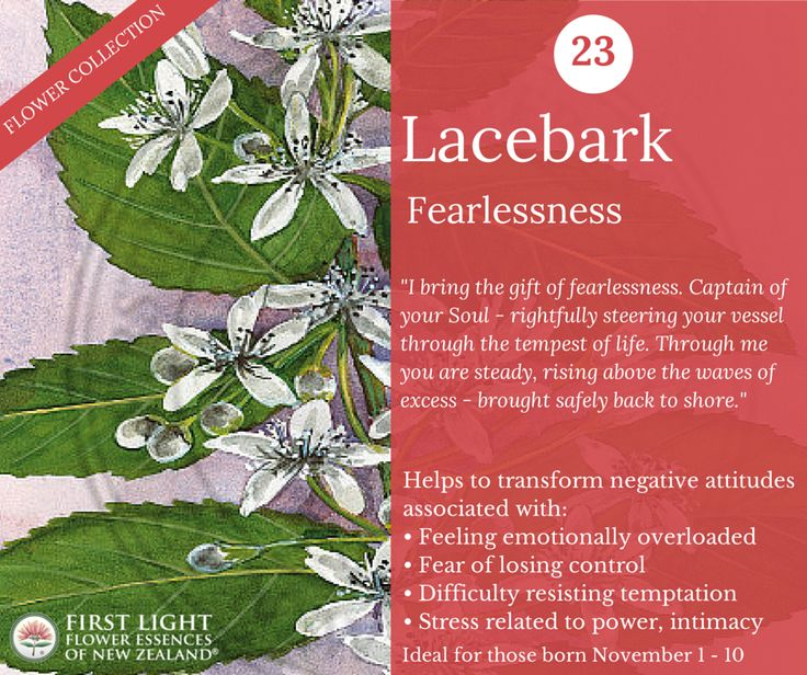 Lacebark - Fearlessness - helps to transform fear into strength. Assists with sudden outbreaks of rage, tantrums and bullying tendencies. Personal power flower for those born Nov 1-10 (Scorpio).