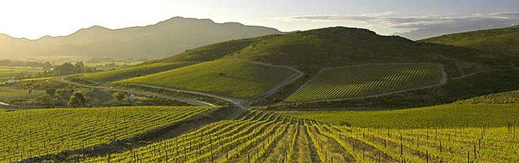 De Wetshof Wine Estate vineyards