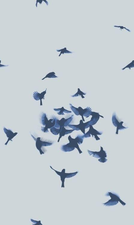 طيرنا العآإلي باإلموسم الماآإلي 72d26ab7866cb7b799db