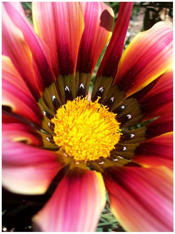 13 best natural form images on Pinterest | Macro ...