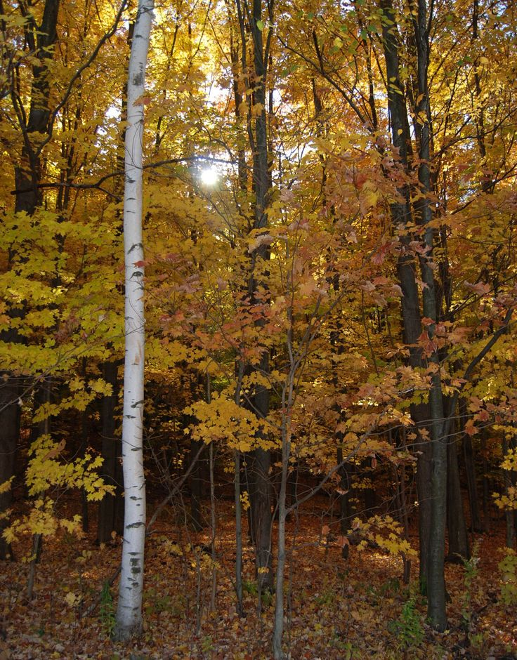 Grand Canyon Pa Directions%0A Celebrate autumn in Wellsboro  PA  with beautiful fall foliage  The fall  season offers cooler temperatures and colorful displays