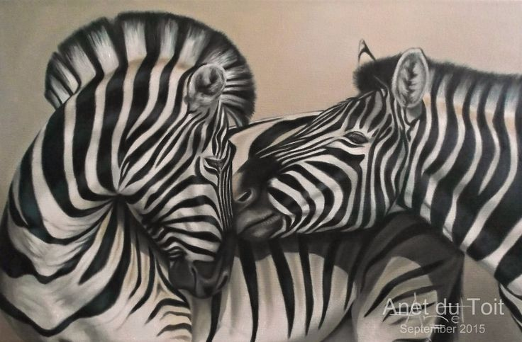 Zebra's Oil on stretched canvas 76cm x 50cm SOLD