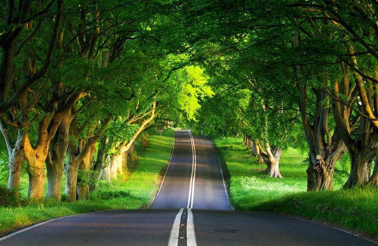 Ağaçlı yol...