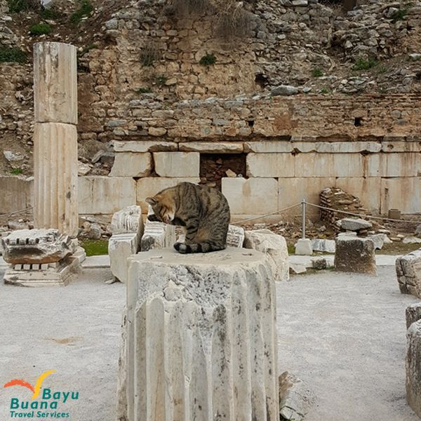Cat of Ephesus - if you have a chance to visit Turkey, you will find out that  In the Ruins of Ancient Ephesus live hundreds of cats.
