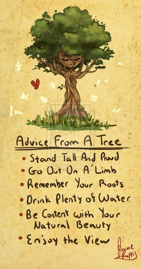Advice from a tree. Stand Tall and Proud. Go out on a limb. Remeber your roots. Drink Plenty of water. Be content with your natural beauty. Enjoy the view  #PictureQuotes, #Inspirational   If you like it ♥Share it♥  with your friends.  View more #quotes on http://quotes-lover.com/