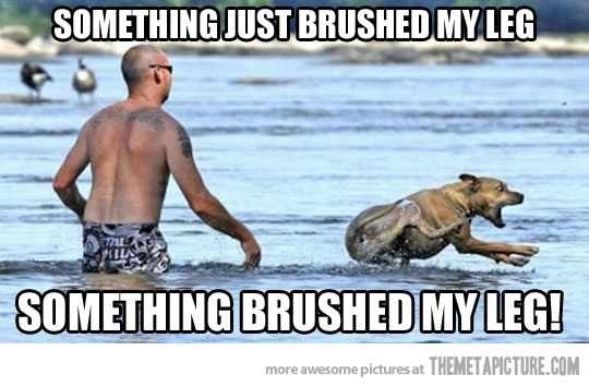 Every time I'm at the beach, - Imgur