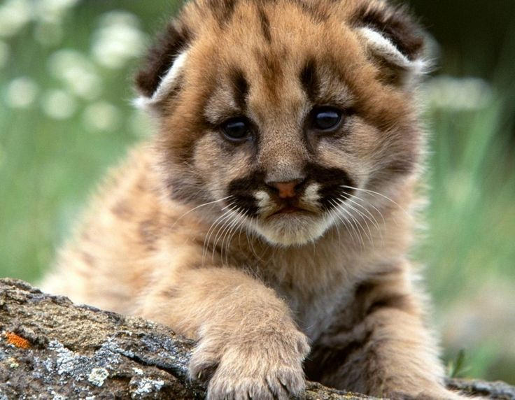 bayi hewan, hewan