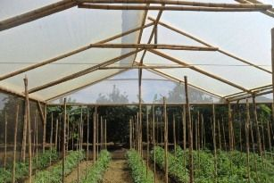 Invernaderos de Guadua Organoponicos. La Liberia, Jamundí - Valle del Cauca (CO). BIO-MAT Cali (CO).
