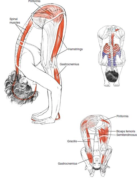 forward bend with head release toward floor. showing proper alignment of head/spine