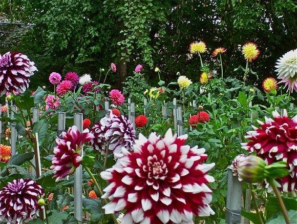 Flower Garden Ideas In Michigan 31 best michigan flowers images on pinterest | flower gardening