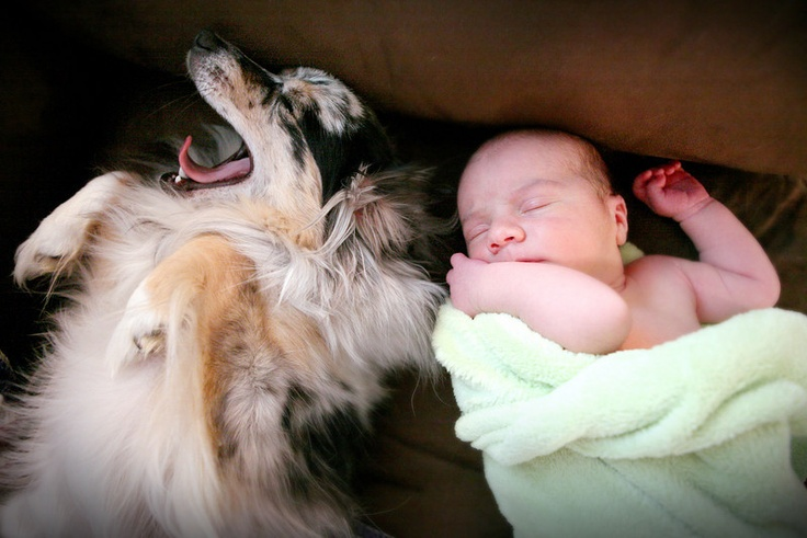 love the dog and the baby together