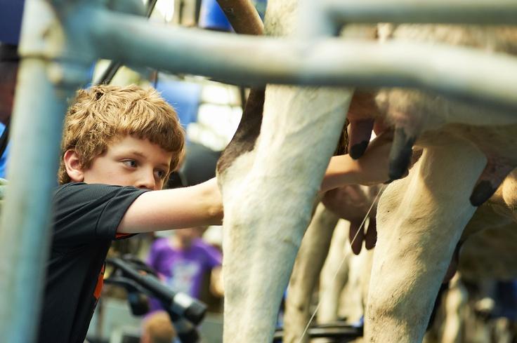 Een koe melken met eigen hand, dat doe je niet iedere dag.