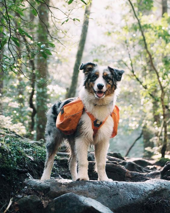 The right equipment makes all the difference. And for taking your dog out on walks and runs, the right harness is vital.
