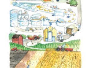 Leivän reitti -juliste, kuvitus Heli Pukki
