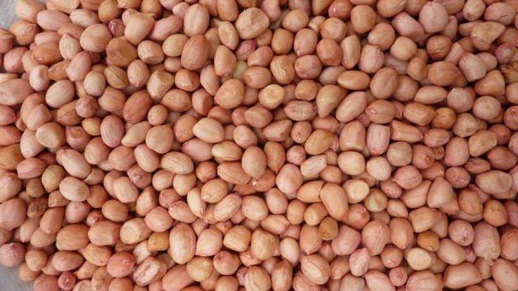 Peanut, Spanish Peanuts . Untreated Seeds ,Heirloom Organically Grown and Hand Harvest !