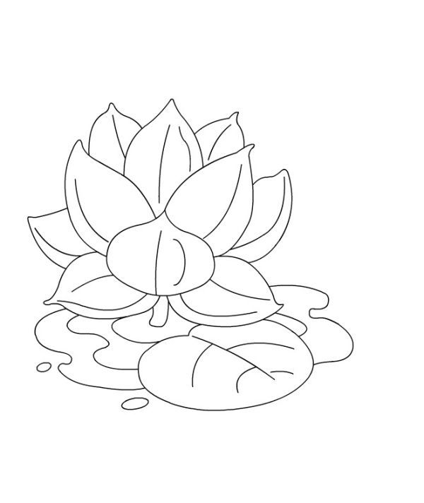 Lotus Coloring Pages Printable Free Coloring Sheets Flower Coloring Pages Lotus Flower Colors Lotus Drawing