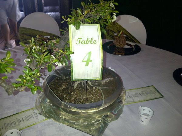 Bonsai tree www.iceevents.co.za