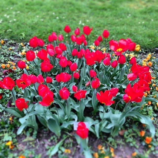 Farbenpracht II #Flora #Köln - @Dirk Steinmetz- #webstagram