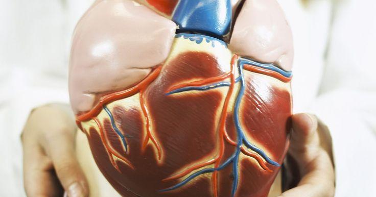 Cómo hacer un corazón humano para niños . Comprender la anatomía del corazón humano puede ser una parte esencial de la educación de un niño. Sin embargo, también puede ser una cosa difícil de enseñar si sólo te apegas a las palabras en una página y la foto ocasional. Dar a un niño la oportunidad de ensuciarse un poco y construir un modelo del corazón puede ser una forma interactiva de ...