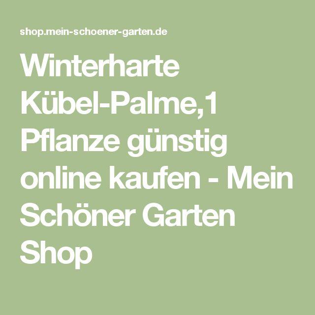 Winterharte Kübel-Palme,1 Pflanze günstig online kaufen - Mein Schöner Garten Shop