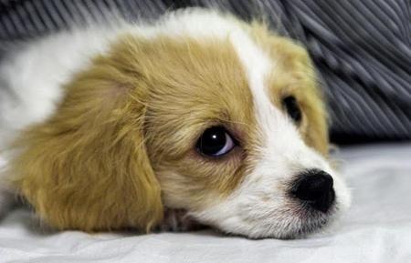 Dog Behavior Training To Housebreak Your PuppyBehavior Training, Aww, Cute Puppies, Animal 3, Puppies Dogs Eye, Cutest Puppies, Dogs Behavior, Mixed Breeds, Adorable Animal