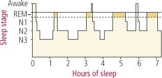 How much sleep do you really need?  Adults:  7.5 - 9 hrs per night.  Great article on the importance of sleep!