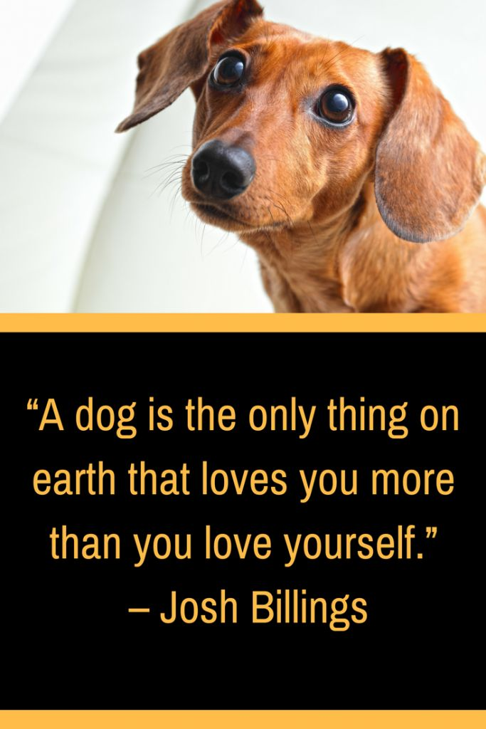 11 Best Dog Gifts To Give Your Four Legged Friend Dogquote